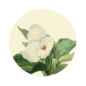Floral Creeper